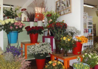 Blumel Kilger Schenken5